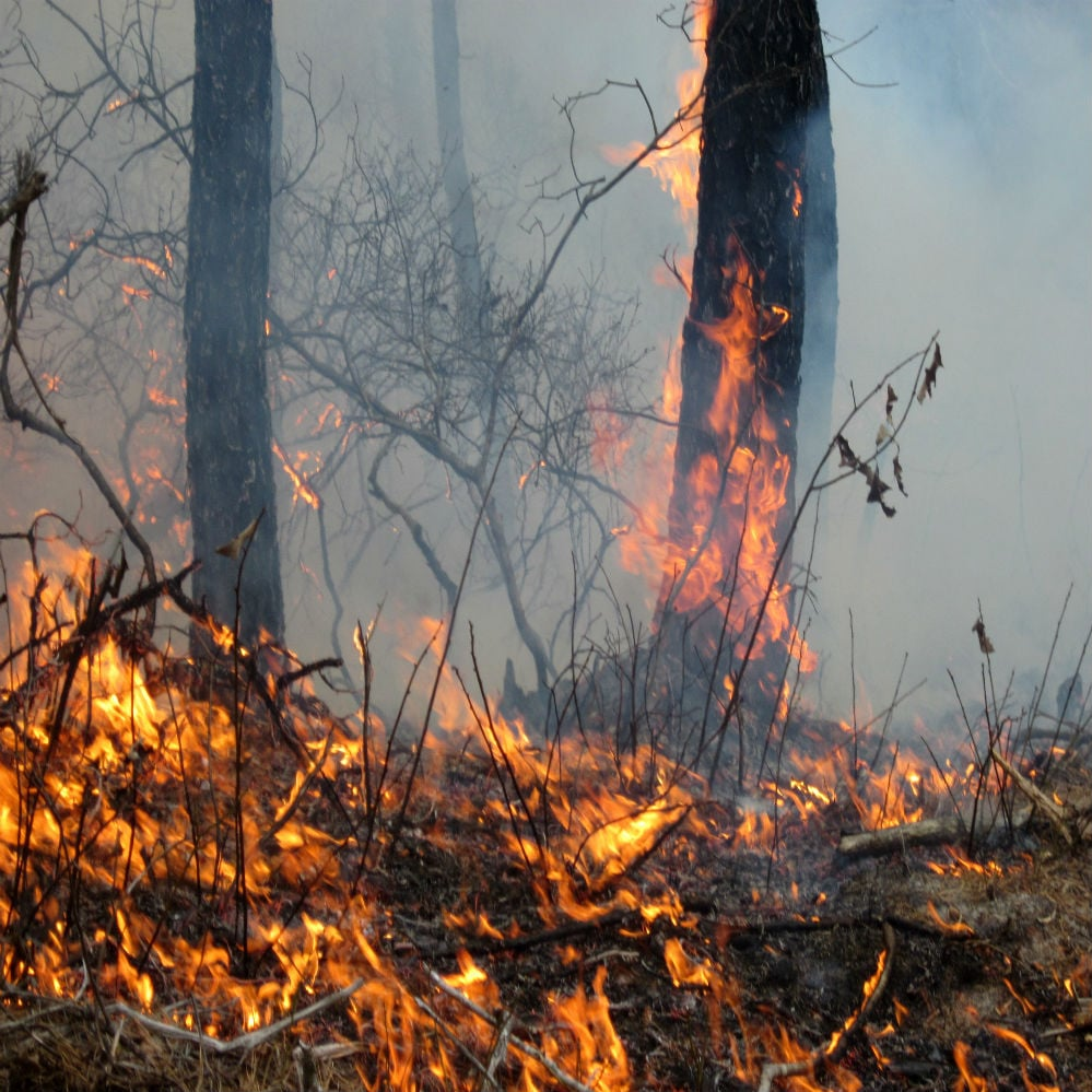 Will the Amazon Rainforest Fire Burn Down the Economy?