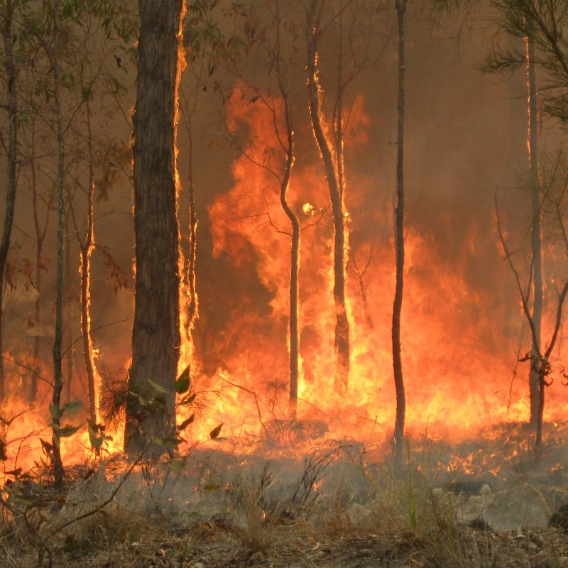 What do the Austrialian Fires Mean for the Economy of Australia?